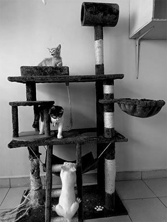 Safe comfortable and well-ventilated cattery and kennels in veterinary clinic & surgery Animal Health Center @ Ara in Ara Damansara Petaling Jaya